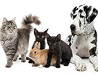 Picture for category Pet Medicine